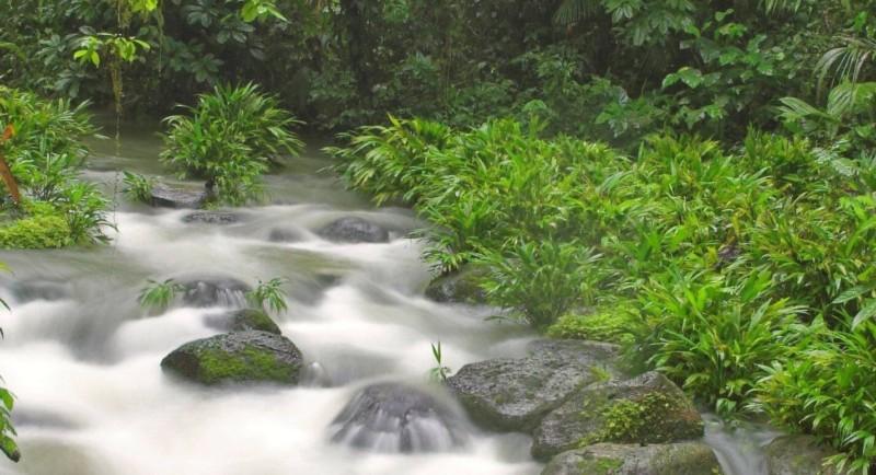 Nachhaltigkeit von Anfang an mit der Rainforest Alliance